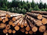 Гройсман поручил профильным министерствам до конца 2018г разработать нормативную базу для запуска электронных аукционов леса